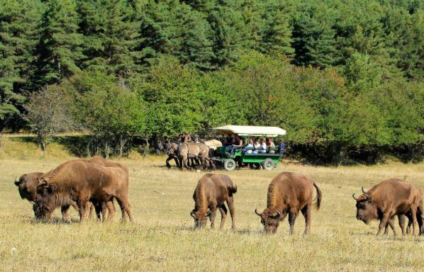 Safari en calèche à la Réserve des Monts d'Azur à Thorenc